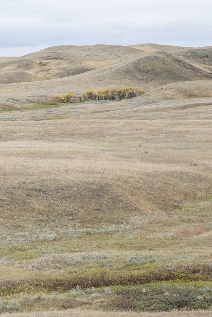 prairie grass with rolling hills on the horizon